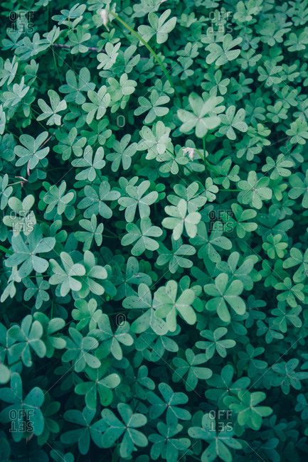From above verdant fresh wild plant growing on land
