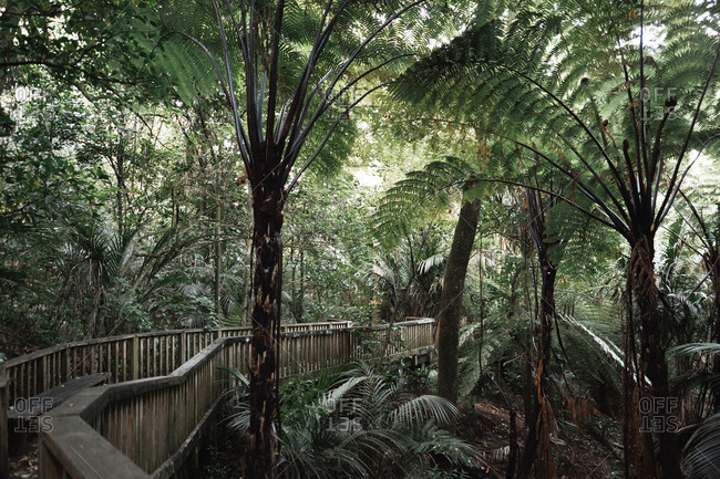 Verdant fresh exotic trees near wooden footbridge in park in Auckland, New Zealand