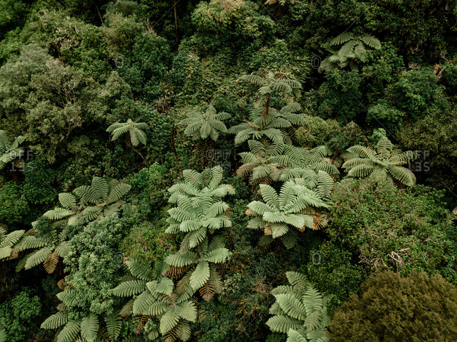 Drone view of small waterfall in green tropics in Kaiate, New Zealand