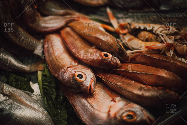 Different fresh fishes on market stall