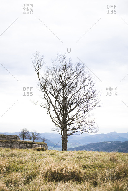 Dry wood between grass growing on high mountains and cloudy sky