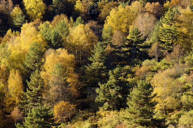 Autumnal woodland with mixed trees in sunlight
