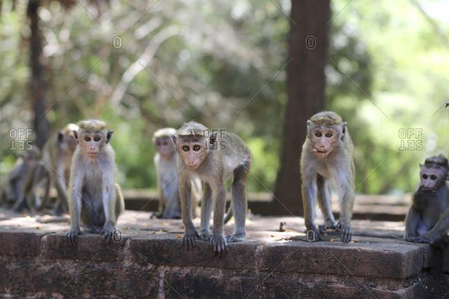 Funny macaques looking at camera