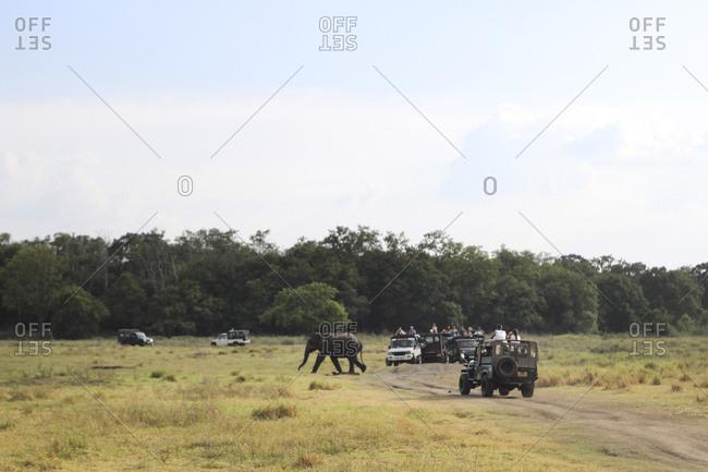 Elephant walking on nature