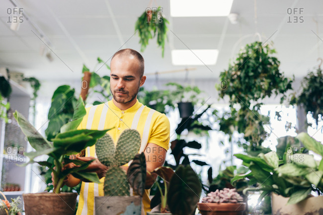 Man taking care of plants in flower shop. Small business, work, occupation. Houseplants.