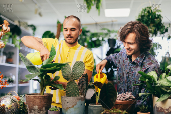 Two man watering plants in flower shop. Florist, small business, retailing. Natural decorations.