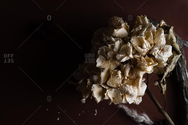 Macro image of dried hydrangea flower