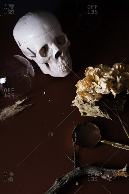 A still life with human skull model, dried hydrangea flower and magnifier on brown background