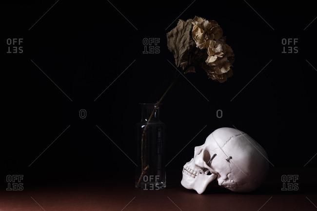 Human skull model and dried hydrangea