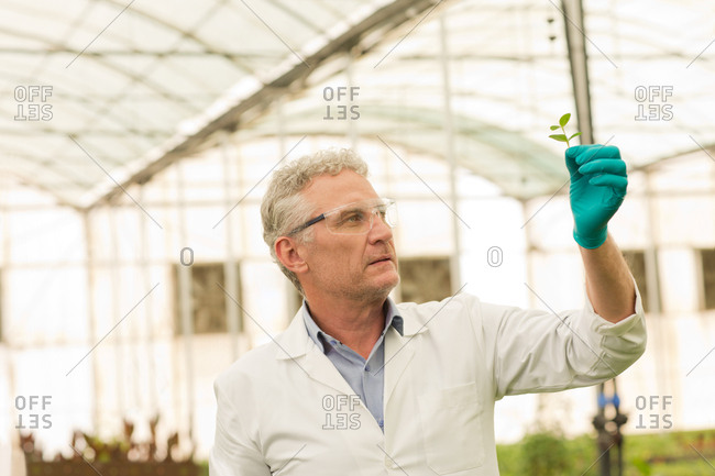 Botanist analyzing leaf sample at greenhouse.
