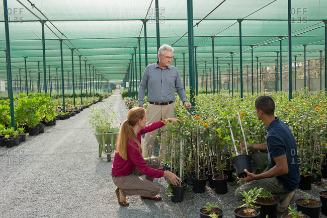 Man and woman analyzing plants at plant nursery.