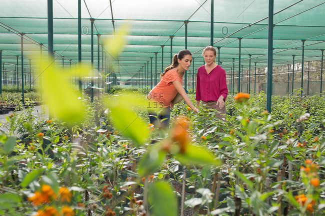 Women discussing at plant nursery.