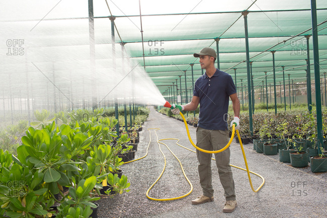 Worker watering plants at greenhouse.