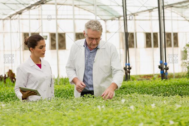 Botanists analyzing plants at greenhouse.