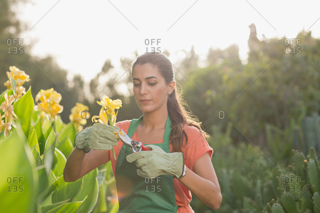 Woman pruning flowers at garden.