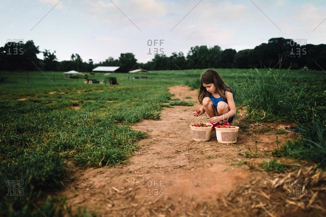 Little girl examining strawberries