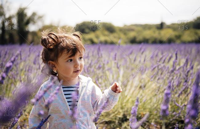 France- Grignan- portrait of baby girl in lavender field