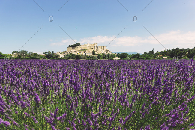 France- Grignan- view to the village with lavender field in the foreground