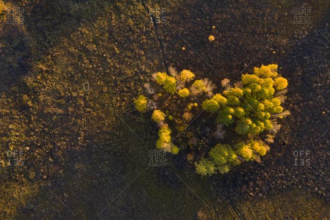 Wild trees gather like heart shape under golden sunset