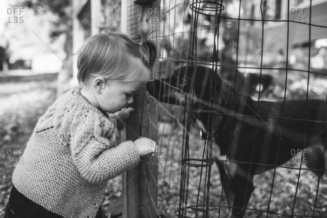 Dog sniffs toddler through fence