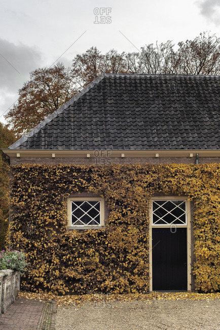 House covered in yellow leaves