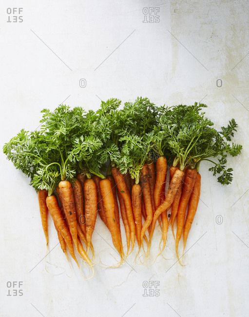 Fresh bunch of carrots on light background