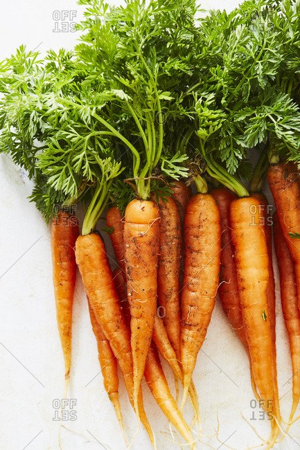 Close up of a bunch of carrots on light background