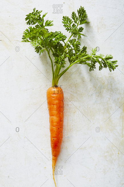 A single carrot on light background