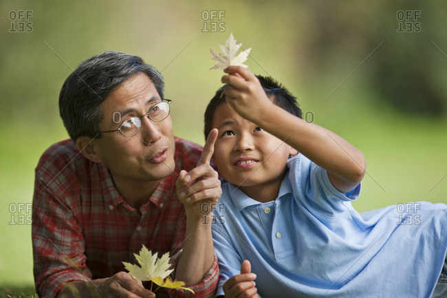 Father and son looking at maple leaves together.