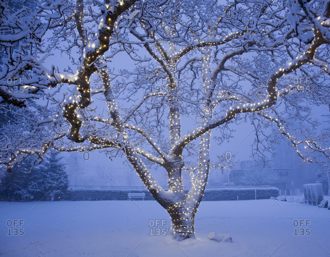 Large tree with lights during snow storm