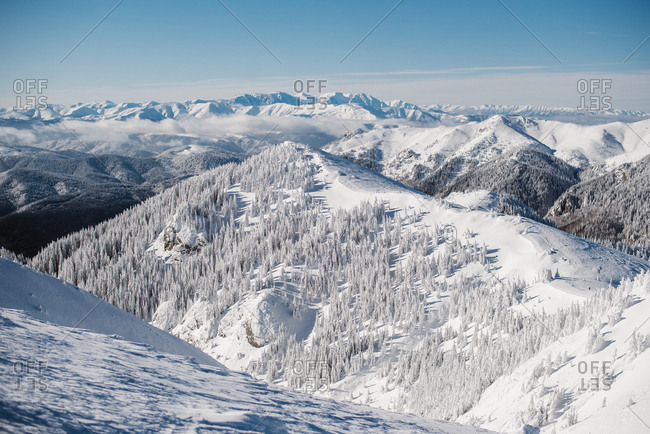 Vast snowy mountain and trees