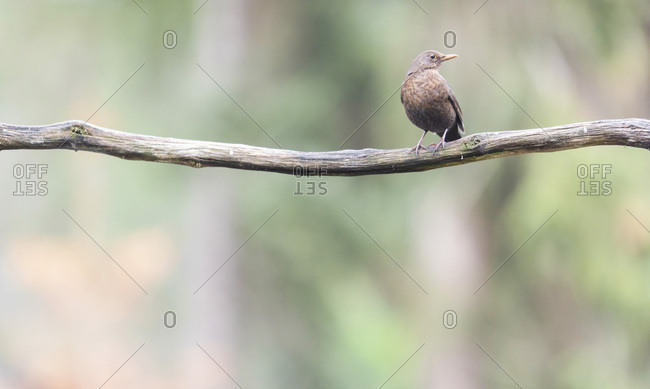 Brown bird on a tree branch looking away