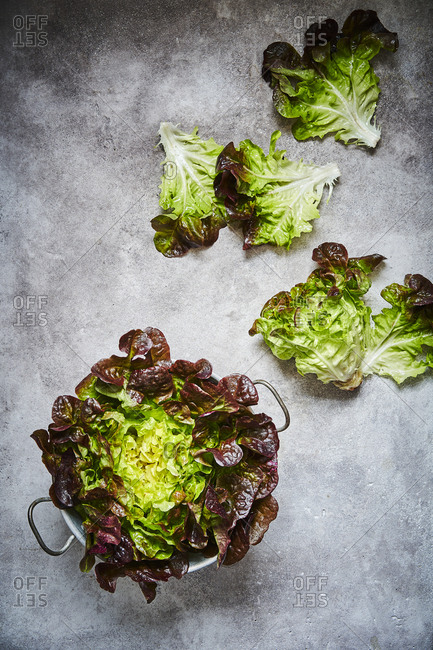 A red oak leaf lettuce shot from above in a collander with leaves scattered across the surface to the top right.