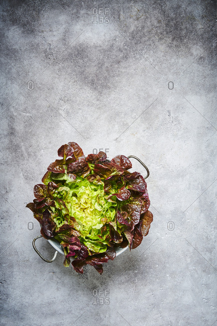 A red oak leaf lettuce shot from above in a colander with plenty of space for copy.