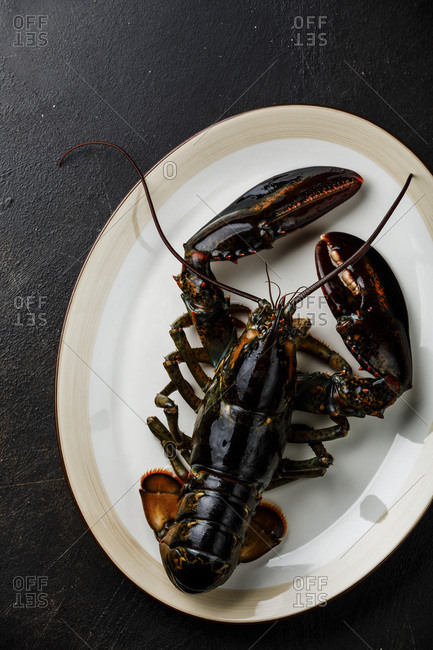 Fresh raw live Lobster on plate on black background