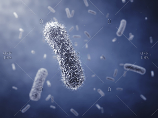 Bacillus sp. bacteria - Offset Collection