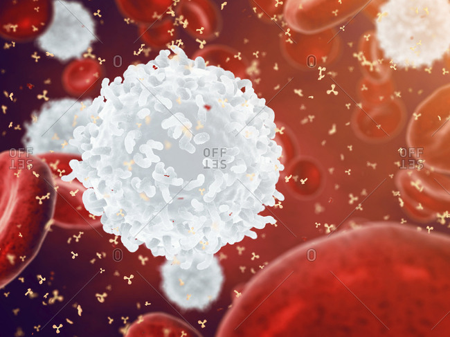 Human blood cells - Offset Collection