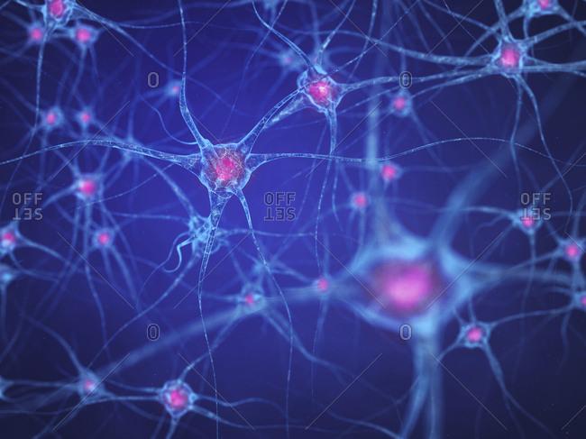 Nerve cells (neurons)