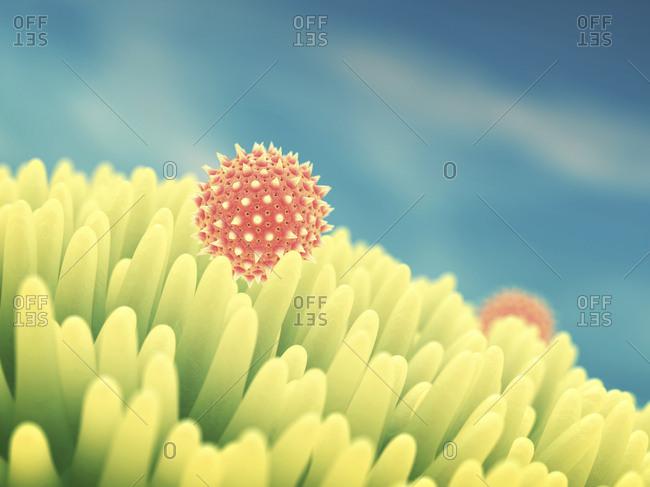 Pollen grains on flower