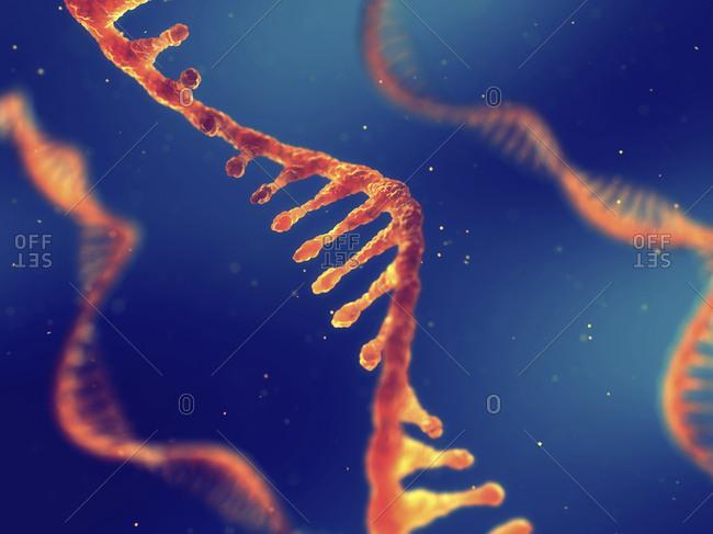 RNA (ribonucleic acid) molecules