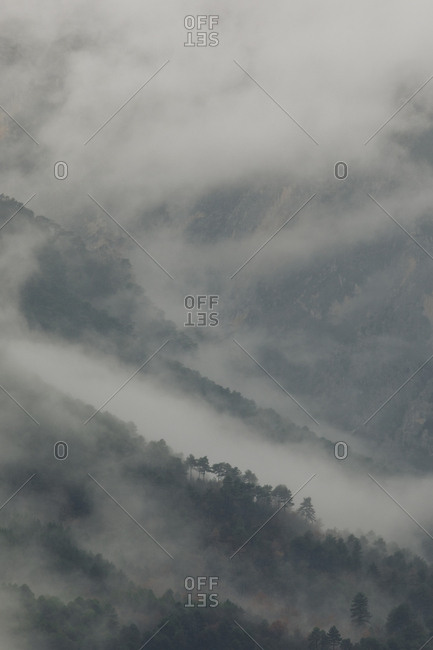 Dense fog rolling over forest in the Pyrenees Mountains, Europe
