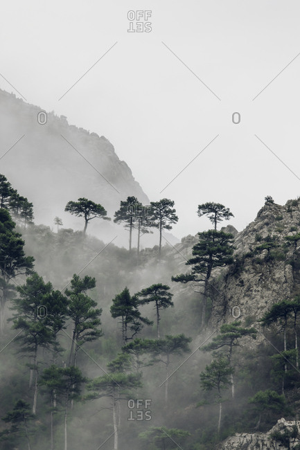 Foggy forest in the Pyrenees Mountains, Europe