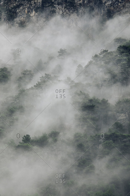 Dense foggy woods in the Pyrenees Mountains, Europe