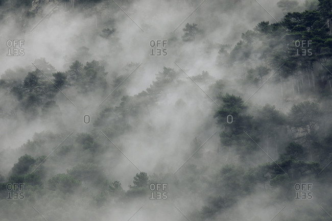 Foggy woods in the Pyrenees Mountains, Europe