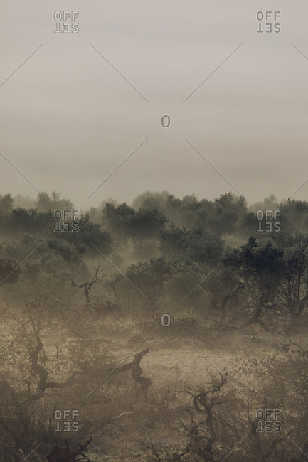 Forest with burned trees surrounded by smoky haze