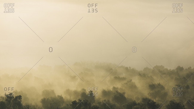 Forest with trees surrounded by smoky haze