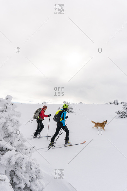 Two men and dog skiing on a snowy hill