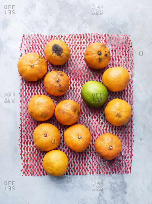 Fresh and over-ripe tangerines with one lime on plastic net
