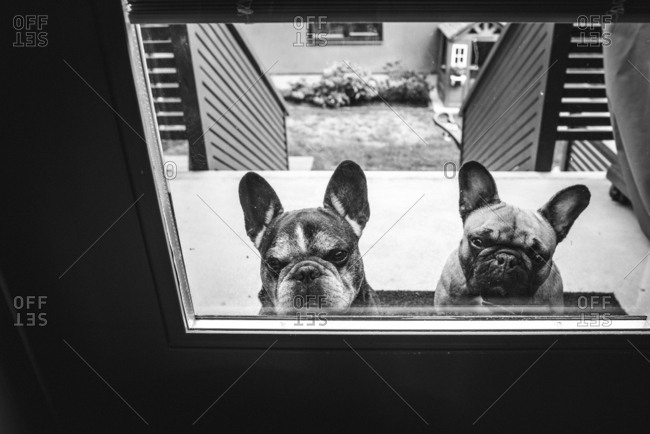 Two dogs peeping in through door window.