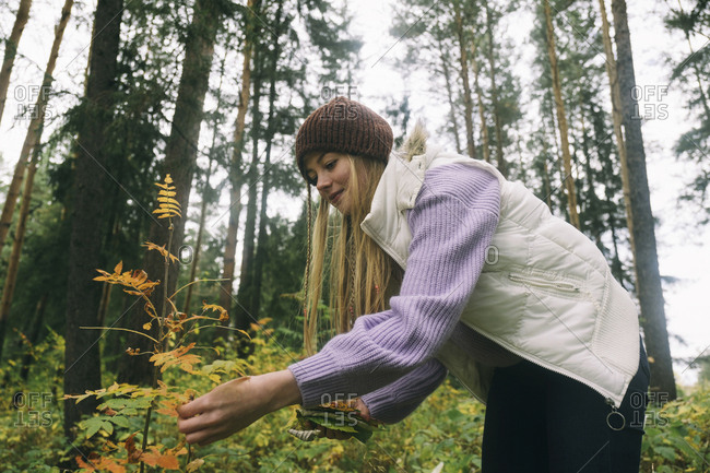 Low angle view of woman picking leaves while standing against trees in forest